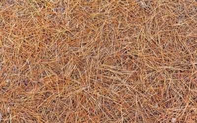 6 Benefits of Pine Straw Mulch